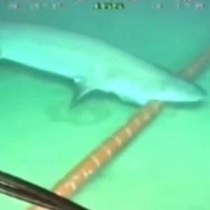 Imagem de agosto de 2014 mostra tubarão atacando cabo; espécies confundem sinais de fibras ópticas com o de peixes