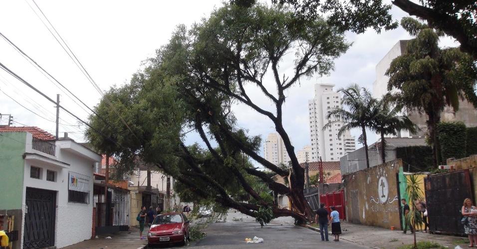 12.jan.2015 - Árvore cai após temporal na Mooca, na zona leste de São Paulo, nesta segunda-feira. Duas árvores caíram na rua Padre Raposo, uma delas acertou um carro, e a outra rompeu a fiação elétrica. Toda a região ficou sem energia