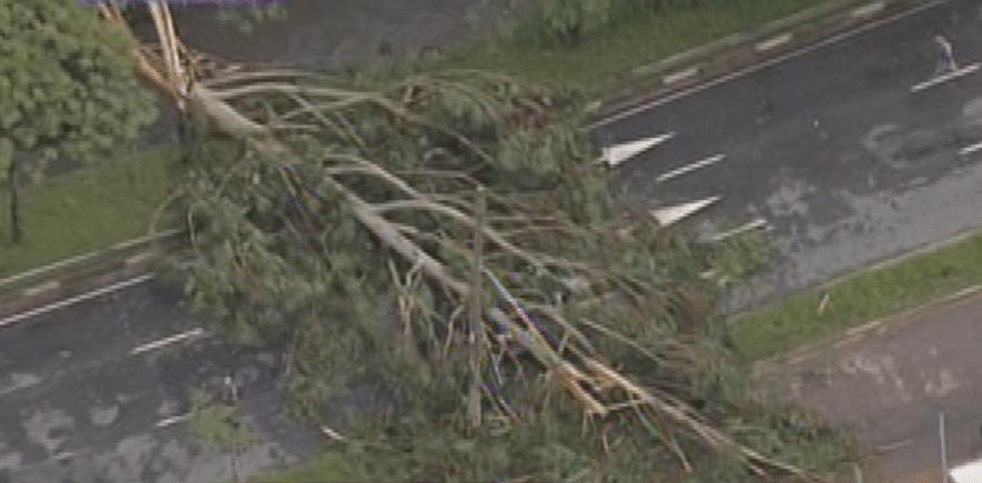 12.jan.2015 - Árvore cai e atinge um veículo com três passageiros na escola Politécnica da USP (Universidade de São Paulo), na zona oeste de São Paulo, nesta segunda-feira (12), após forte chuva que atingiu a região. Os passageiros tiveram ferimentos leves