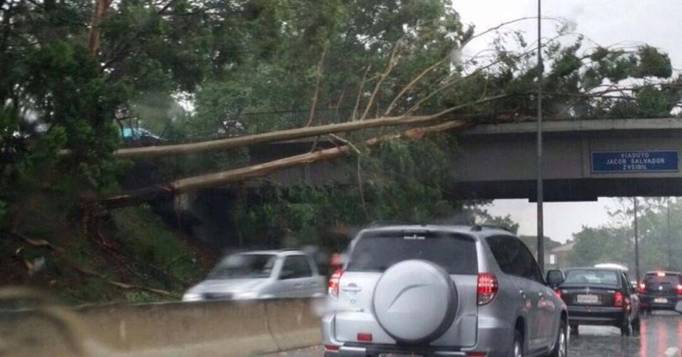 12.jan.2015 - Árvore cai em cima de viaduto na rodovia Raposo Tavares, na zona oeste de São Paulo, nesta segunda-feira (12), após forte chuva