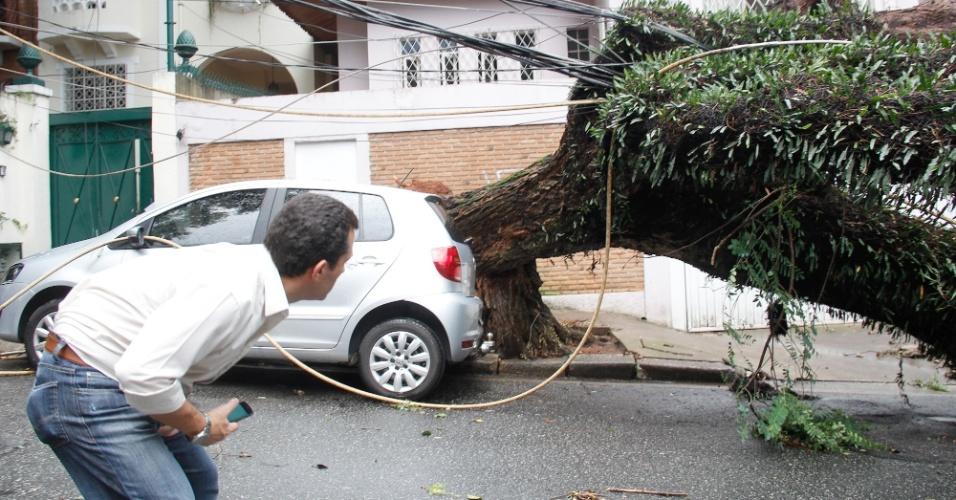 13.jan.2015 - A chuva forte que atingiu a capital paulista na tarde de segunda-feira (12) provocou a queda de uma árvore de grande porte na rua Morgado de Matheus, no bairro da Vila Mariana, zona sul de São Paulo. A árvore caiu sobre três veículos e derrubou dois postes
