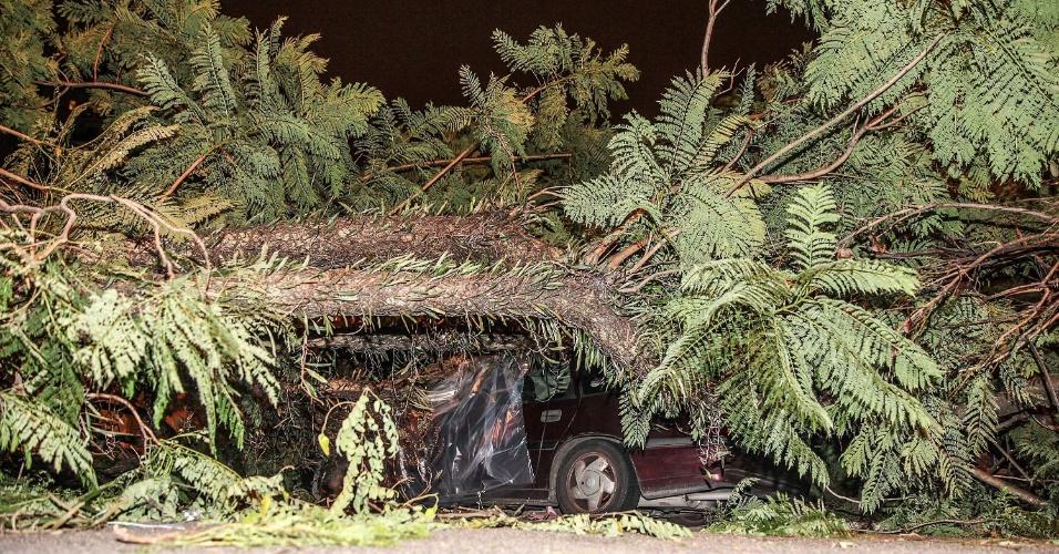 16.jan.2015 - Árvore de grande porte caiu sobre um carro na rua Caramuru, na Saúde, zona sul de São Paulo (SP), na noite desta quinta-feira (15), e interdita totalmente a via. Ninguém se feriu