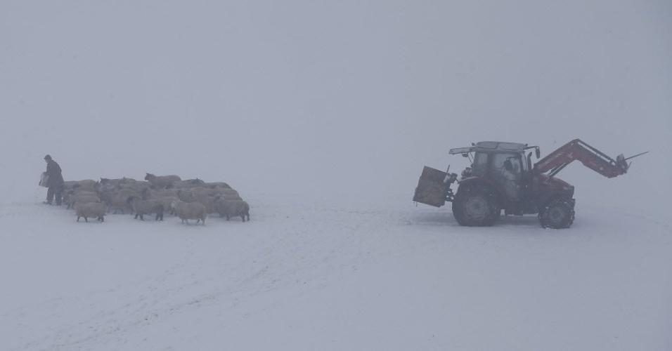 21.jan.2015 - Um agricultor alimenta ovelhas em área coberta por neve em Newhaven, na Inglaterra