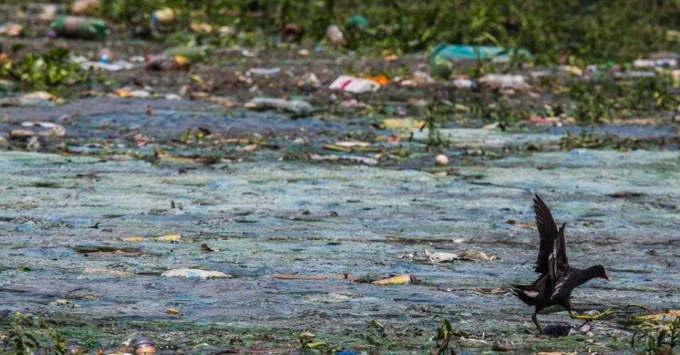 23.jan.2015 - Ave procura comida em meio ao lixo que boia na represa Billings, na zona Sul de São Paulo. Ackmin anunciou que água da represa pode ser usada para abastecer outros sistemas