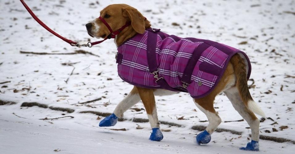 26.jan.2015 - Um cachorro com casaco e sapatinhos passeia pelo Central Park, em Nova York (EUA). A costa leste dos Estados Unidos (da cidade de Filadélfia, passando por Nova York e seguindo até o Estado do Maine) se prepara para uma nevasca possivelmente histórica, que despejaria mais de um metro de neve sobre a região, além de prejudicar o transporte de milhões de pessoas