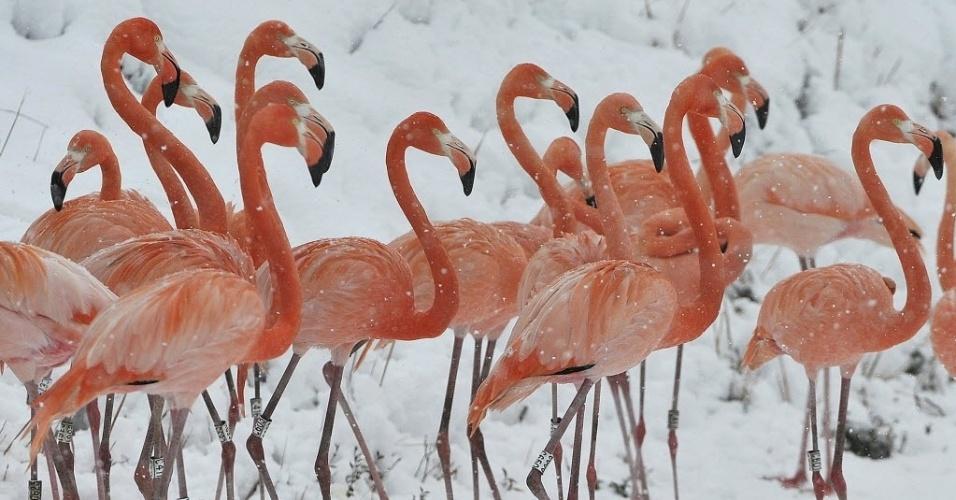 29.jan.2015 - Flamingos enfrentam neve em uma reserva ambiental em Hefei, na província de Anhui, na China