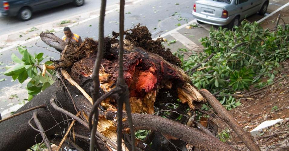 31.jan.2015 - Árvore derrubada pela chuva é vista na avenida Afonso D'Escragnolle Taunay, na esquina com rua Brazópolis, na Vila Monte Alegre, zona sul de São Paulo. Não houve vítimas