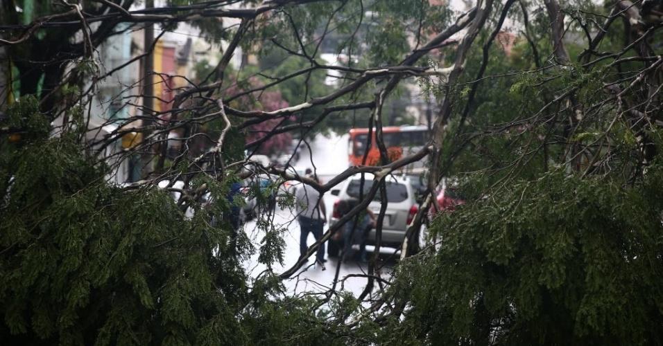2.fev.2015 - A fortes chuvas que atingiram a cidade de São Paulo nesta segunda-feira (2) derrubaram um galho de árvore na rua Capote Valente, no bairro de Pinheiros, na zona oeste da capital paulista. A via foi interditada