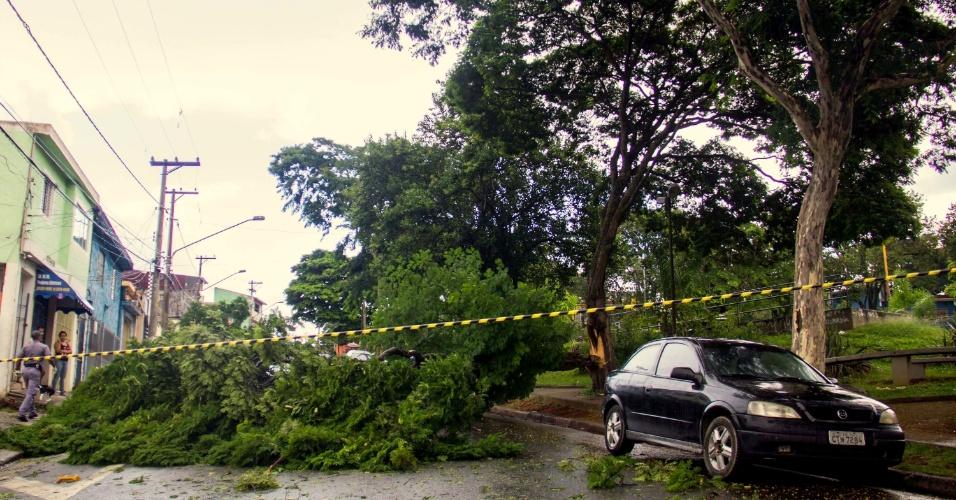2.fev.2015 - Árvore cai após fortes ventos e bloqueia a avenida Comendador Frei Zarzur, no bairro de Pirituba, zona oeste de São Paulo, nesta segunda-feira (2)