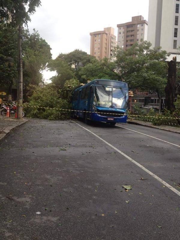 Algumas árvores caíram na avenida Getúlio Vargas, na região centro-sul de Belo Horizonte, na tarde desta terça-feira (3), após fortes chuvas atingirem a capital mineira. Segundo os bombeiros, veículos foram atingidos, mas ninguém se feriu. O tráfego de carros ficou prejudicado no local por causa dos trabalhos de retirada das árvores da via