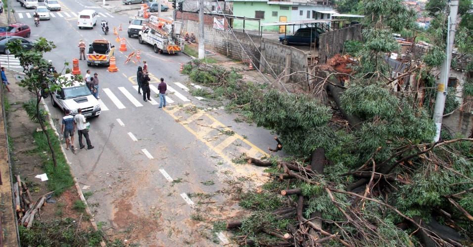 4.fev.2015 - Uma árvore caiu na avenida Elísio Teixeira Leite, no bairro de Taipas, zona norte de São Paulo, na manhã desta quarta-feira (4). A chuva forte que atingiu a região nesta terça-feira (3) provocou alagamentos e deslizamentos de terra na capital paulista
