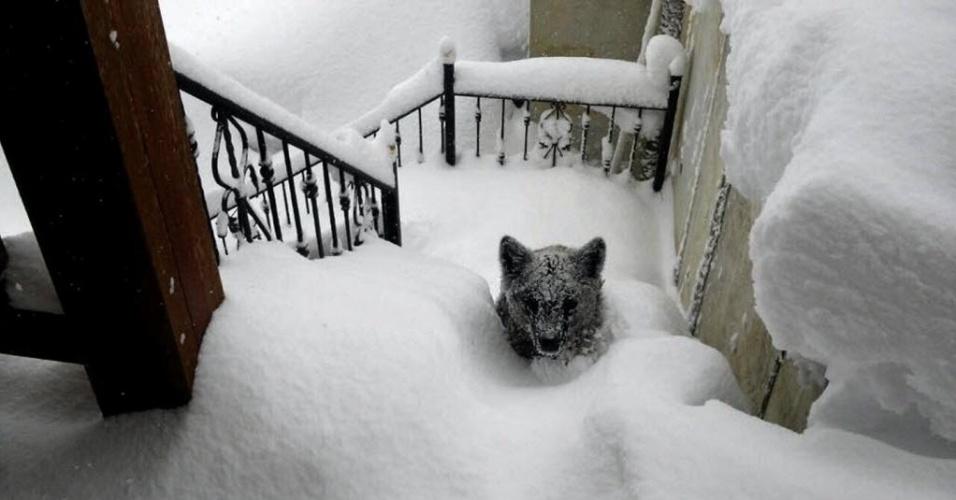 9.fev.2015 - Oscar Montero, vizinho da cidade de Prioro, em Léon, na Espanha, divulgou imagem de um urso que subiu as escadas de sua casa para buscar abrigo durante uma tempestade de neve que atingiu a região no domingo (8). Montero acreditava que o animal era um filhote de cachorro, mas ao abrir a porta ficou surpreso e teve tempo de fotografar o urso, que logo fugiu por trás de casa