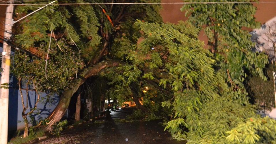 18.fev.2015 - Árvore de grande porte cai e atinge a fiação elétrica na rua Campina da Taborda, no bairro da Saúde, na zona sul de São Paulo, na madrugada desta quarta-feira (18). A rua foi interditada. Ninguém ficou ferido