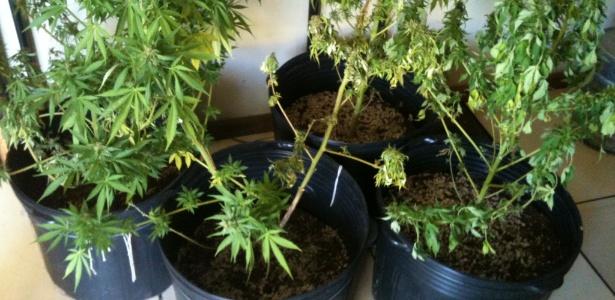 Quatro plantas de maconha foram apreendidas na casa do músico, em Miguel Pereira