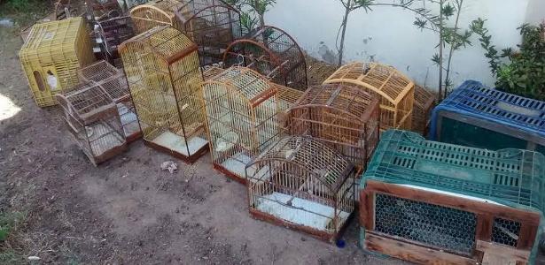 Dois homem foram detidos e 81 pássaros silvestres resgatados por policiais do setor de Inteligência do Comando de Polícia Ambiental (CPAM), nesta terça-feira (24) em Campos dos Goytacazes, no norte do Rio de Janeiro. Os policiais encontraram gaiolas com diversas espécies da fauna silvestre, como trinca ferros, curiós, tizil e papagaios