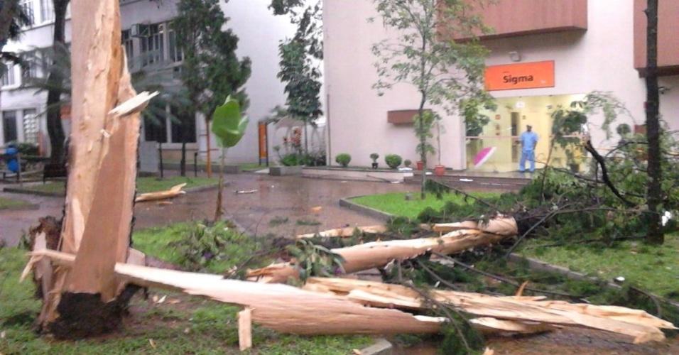 25.fev.2015 - O internauta Henrique Gouveia enviou pelo WhatsApp do UOL (11) 97500-1925 a imagem de uma árvore que foi atingida por um raio e caiu na Universidade Metodista, no bairro Rudge Ramos, em São Bernardo do Campo (SP).