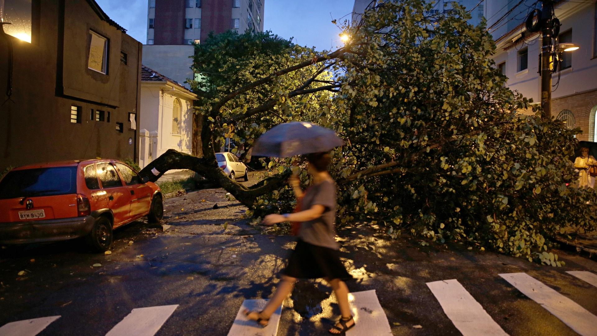 25.fev.2015 - Uma árvore caiu no cruzamento das ruas João Moura e Gabriel Monteiro da Silva, no Jardim Paulistano, após forte chuva que atingiu a cidade de São Paulo
