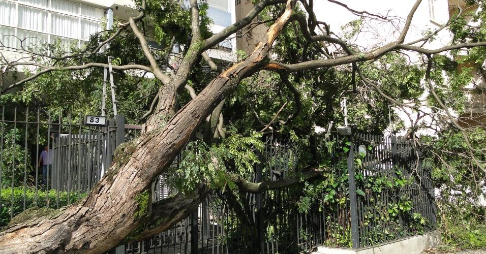 16.fev.2016 - Árvore  barra entrada de moradores em prédio da rua Veiga Filho, em Higienópolis