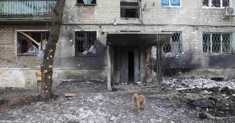 28.fev.2015 - Um cachorro para em frente a um prédio destruído pelo confronto entre o Exército ucraniano e separatistas pró-Rússia, na cidade de Debaltseve