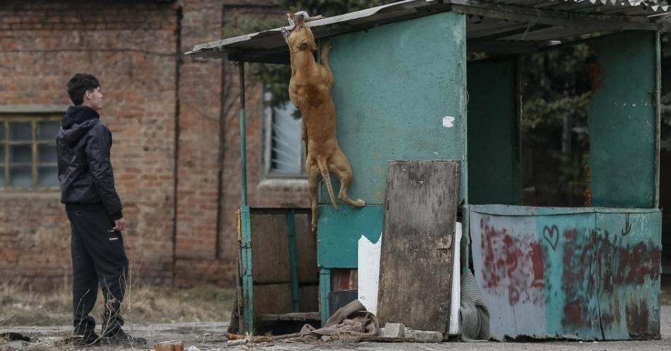 12.mar.2015 - Morador brinca com um cão na cidade oriental de Slaviansk, na região de Donetsk, na Ucrânia, nesta quinta-feira (12). O governo ucraniano e os separatistas pró-Rússia, que assinaram há um mês os acordos de paz, se acusam mutuamente de romper o cessar-fogo