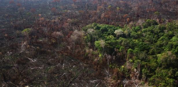 Área devastada ilegalmente na floresta amazônica, em Novo Progresso (PA)