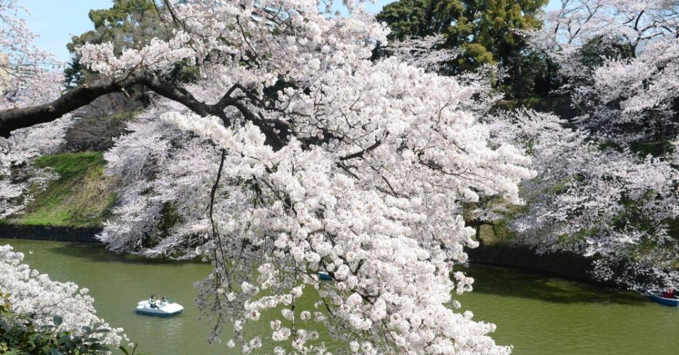Resultado de imagem para cerejeiras em toquio