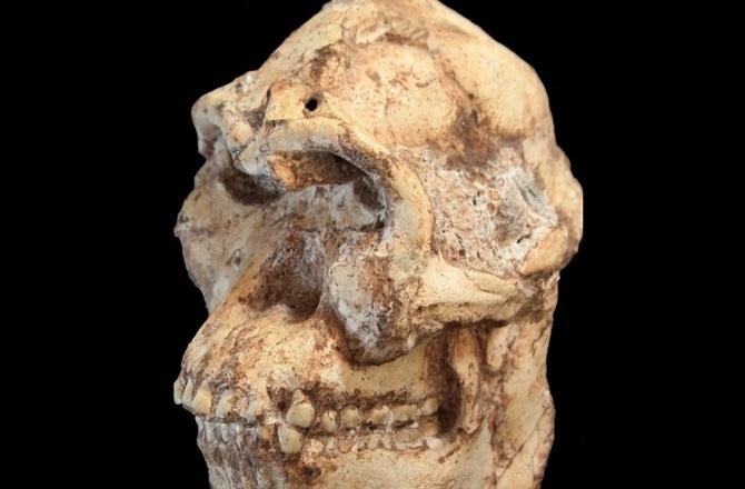 01.abr.2015 - O ancestral do homem mais antigo já descoberto, o sul-africano ?Little Foot?, viveu há 3,7 milhões de anos, segundo um estudo publicado na revista Nature. Até então, o fóssil etíope chamado de ?Lucy? era o ancestral do homem mais antigo já descoberto, com aproximadamente 3,2 milhões de anos. ?Little Foot? (pequeno pé, em tradução livre) tinha aproximadamente um metro de altura e pés pequenos, e foi encontrado nos anos 90