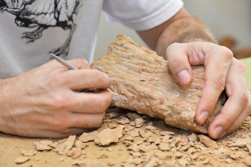 22.abr.2015 - Em todo o mundo são conhecidas 50 espécies desse dinossauro e fósseis de dez delas foram achados no Brasil. Os titanossauros se alimentavam de plantas e tinham, em média, 15 metros de comprimento por 2,5 de altura, além de um pescoço de 4 metros, chegando a pesar dez toneladas