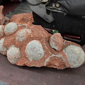 Um ninho com 43 ovos de dinossauro fossilizados foi encontrado na cidade de Heyuan, na província de Guangdong (sul da China)