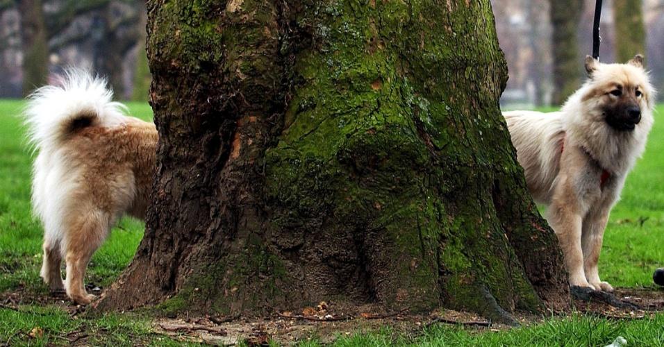 1.mai.2015 - Este deve ser o cachorro mais comprido do mundo, não? Imagem foi tirada no parque Green, em Londres