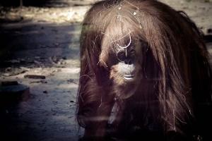 Prefeitura de Buenos Aires decreta fechamento de zoológico da cidade (Foto: Zoológico de Buenos Aires/Divulgação)