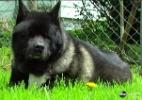 Cachorra fica cega por glaucoma e 'irmãs mais novas' assumem papel de guia