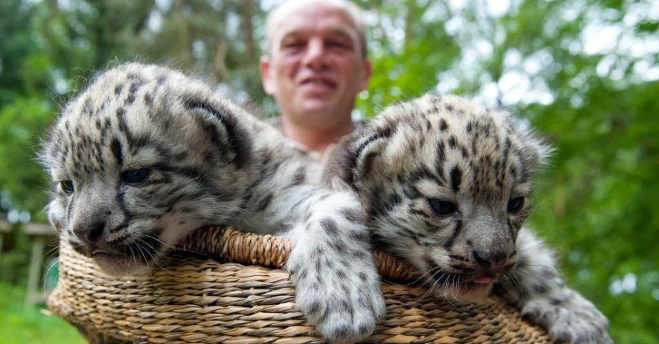 27.mai.2015 - Leopardos-das-neves de duas semanas de idade são apresentados dentro de uma cesta no parque Lueneburg Heath, perto de Niendorf-Hanstedt, no norte da Alemanha
