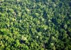 Catalogar todas as espécies de árvores da Amazônia levaria 300 anos, mostra levantamento (Foto: Wikimedia Commons)