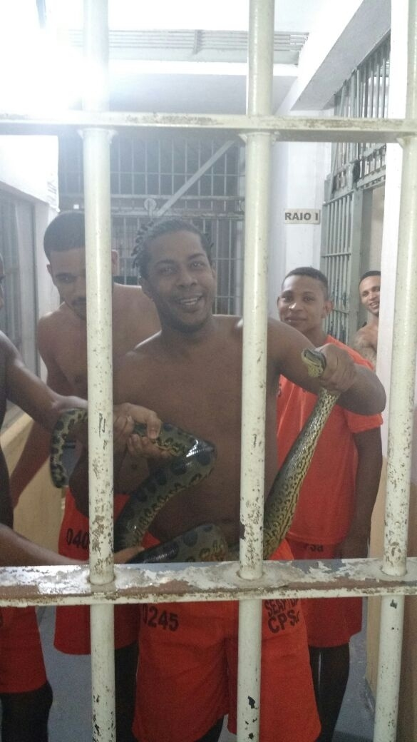 Uma cobra foi encontrada por presos dentro de uma das celas da Lemos Brito, na Bahia. Os próprios detentos capturaram a cobra e posaram para fotos exibindo o animal