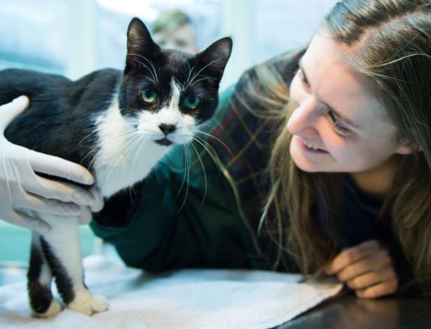 Elena Hanke posa para foto com seu gato Miko no abrigo de animais em Berlim
