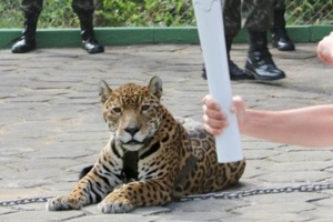 Jair Araújo/Diário do Amazonas