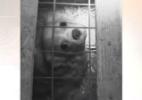 BBC flagra canis da Irlanda que criam cães em condições chocantes (Foto: Reprodução)