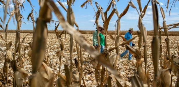 Documentos mostram que grupo norte-americano gastou milhões em compra irregular de áreas agrícolas