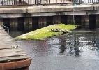 Crocodilo aterroriza moradores de Londres. Não, pera... (Foto: Reprodução/DSWC Londres)