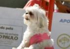 Parque Villa-Lobos tem pista de gelo e trenó para cães; hoje é o último dia (Foto: Divulgação/Petz)