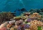 David Doubilet/National Geographic Creative)