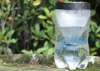 Especialistas alertam contra armadilha caseira de Aedes que viralizou nas redes - Reprodução/BBC