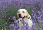 De lírio a maconha: veja as plantas que mais intoxicam cães e gatos (Foto: iStock)
