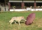 Cuidado com seu melhor amigo: cães se lembram do que viram os donos fazendo (Foto: Mirko Lui)