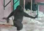 Gorila dançarino viraliza na internet (Foto: Reprodução)