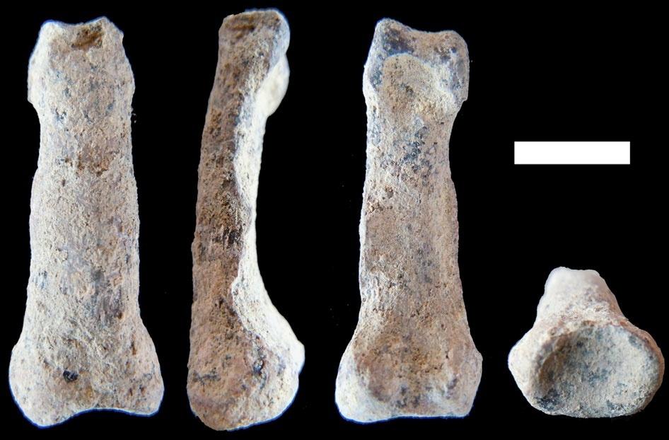 Os paleontólogos encontraram, ainda, evidências que permitiram concluir que esses ancestrais dos homens viviam em cima de árvores. Na imagem, ossos encontrados, que formariam a mão de um hominídeo ainda não definido, porém que teria vivido há 2 milhões de anos