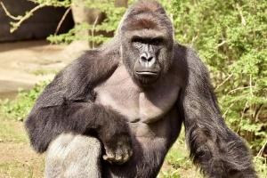 Zoológico de Cincinnati/ Reuters
