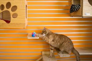 Esconder refeições é a forma mais saudável de alimentar gatos, diz veterinária (Foto: Jessica Kourkounis/The New York Times)