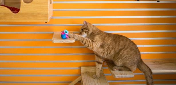 O gato Henrique já é adepto da nova tigela NoBowl